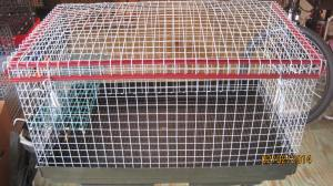 8 x 16 x 10 overall height 8 in interior, galvanized after weld wire, 29.50